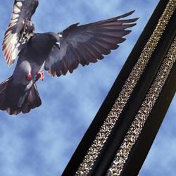Bird Jolt Flat Track